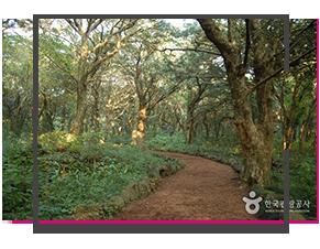 06_Bijarim-Nutmag-Forest